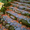 モミジの落ち葉 (山中温泉)さくら公園