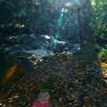写真: 七つ滝 落ち葉と光のシャワー