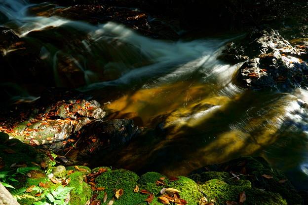 七つ滝 落ち葉