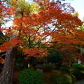 写真: 天徳院  玉姫の寺(1)