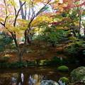 兼六園 山崎山の下 曲水と辰巳用水の取水口(右)