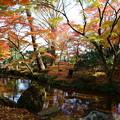 兼六園 曲水と紅葉 落ち葉の絨毯
