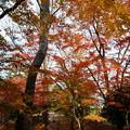 Photos: 兼六園 山崎山からモミジの紅葉
