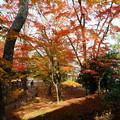 兼六園 山崎山から モミジの紅葉
