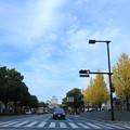 姫路城 イチョウ並木