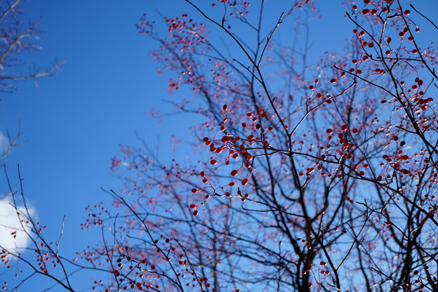 貴重な青空と真っ赤な実