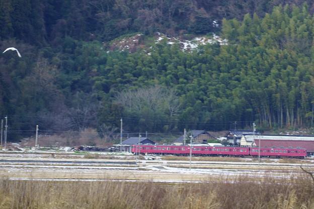 JR415系電車?  コハクチョウが一羽だけ映っていました。