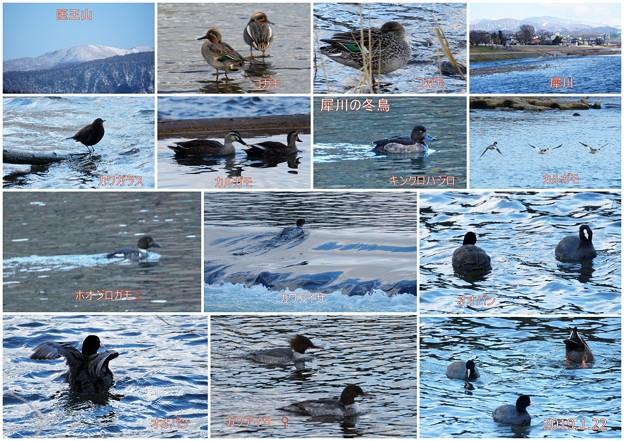 犀川の冬鳥など