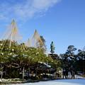 雪の兼六園 日本武尊の像とお花松