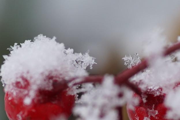 万両と雪の結晶