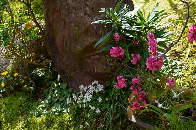 庭の山野草と松竹梅の鉢植え