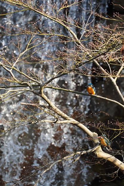 Photos: 翡翠 翠滝を背景に ツーショットで