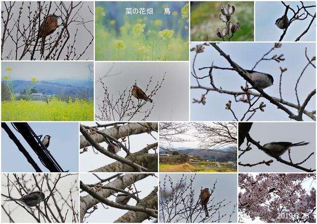 菜の花畑と見かけた鳥