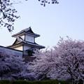 石川門 満開の桜