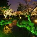 兼六園 観桜期ライトアップ 花見橋から
