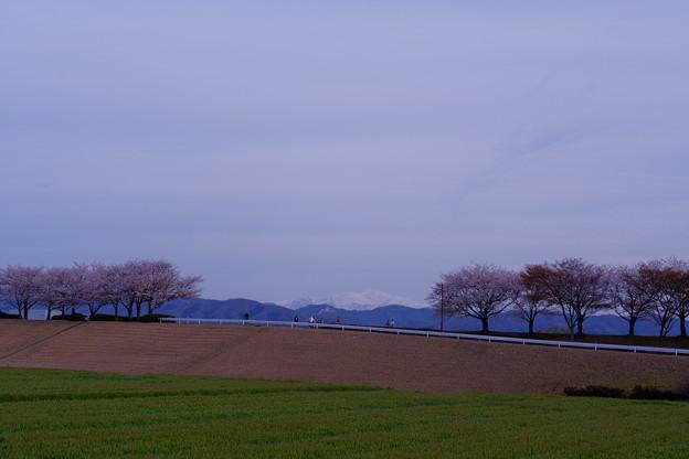 Photos: 手取川から雪の白山と桜並木