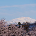 Photos: 雪の白山と桜