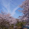 十二ヶ滝 満開の桜と飛行機雲