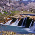 十二ヶ滝 満開の桜