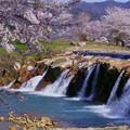 Photos: 十二ヶ滝 満開の桜