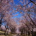 Photos: 奥卯辰山健民公園