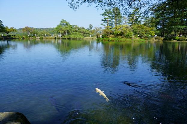Photos: 霞が池 鯉