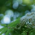 Photos: 何の木? 3