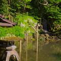 瓢池の白藤
