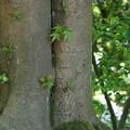 大きな木の根元で