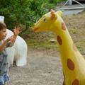公園のミニ動物園
