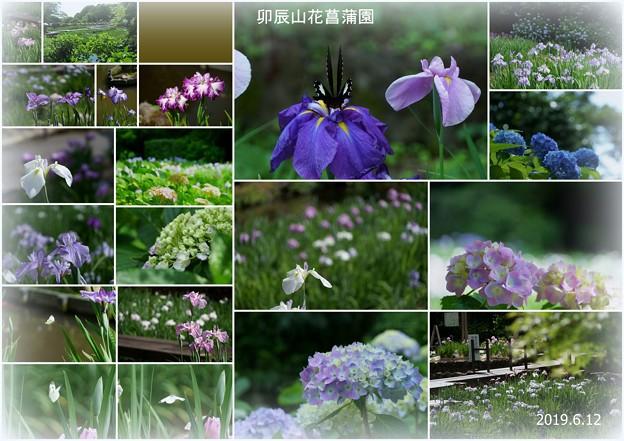 卯辰山 花菖蒲園