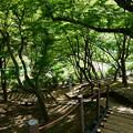 Photos: 卯辰山花菖蒲園を上から