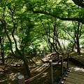 卯辰山花菖蒲園を上から