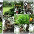 Photos: 夏の兼六園 アオバズク