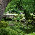 兼六園 瓢池 赤松