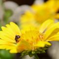 Photos: サンドリームに蜂