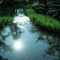 初秋の兼六園 曲水