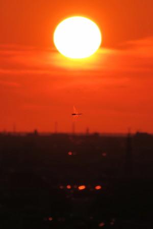 夕陽とトンボ
