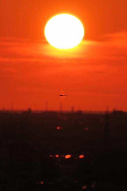 Photos: 夕陽とトンボ