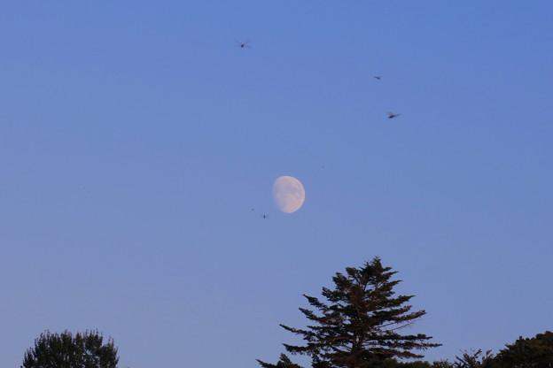 月とトンボ