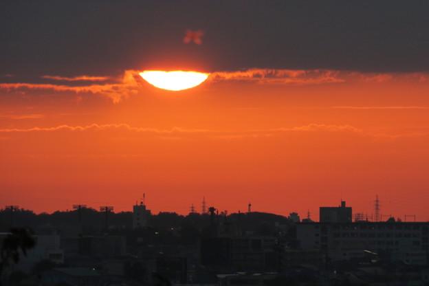 Photos: 夕陽に花飾り?