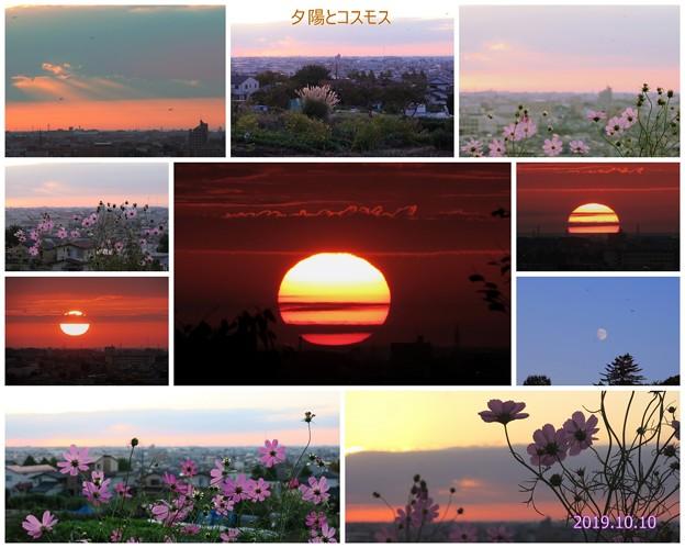 夕陽とコスモス