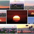 Photos: 夕陽とコスモス