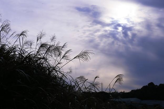 Photos: ススキ