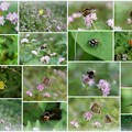 Photos: ミゾソバのお花畑に 蝶と虫