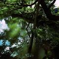 兼六園 瓢池と赤松