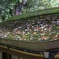 屋根上の紅葉(1)
