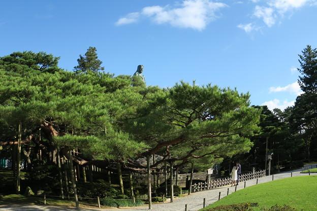 兼六園 日本武尊の像 お花松