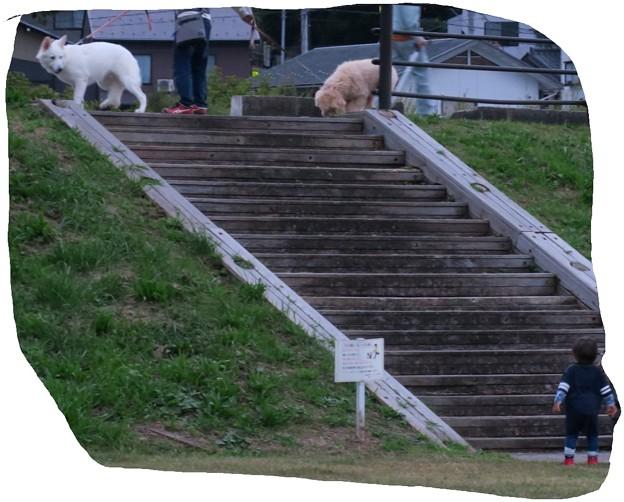 Photos: 大きな犬(@_@)