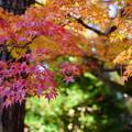 天徳院 紅葉(1)